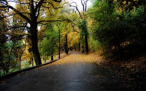 autunno, stradale, alberi, paesaggio