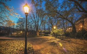 parque, carretera, árboles, linterna