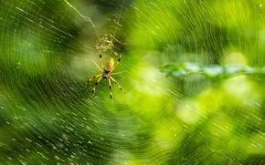 spider, web, Macro