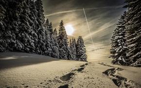 inverno, neve, árvores, pôr do sol, paisagem, papel de parede, papel de parede