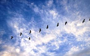 sky, clouds, Cranes, nature, Cranes lost