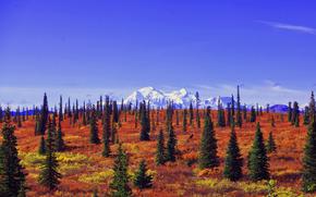Denali National Park, Alaska, поле, деревья, пейзаж