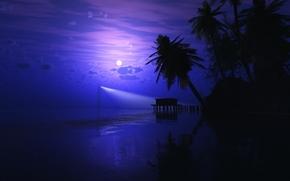 beach, sea, Palms, night, moon