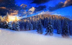 zachód słońca, zima, śnieg, drzew, krajobraz