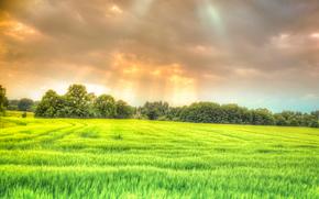 закат, поле, деревья, пейзаж