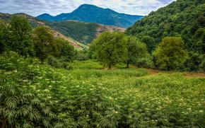 Soobatan, Talesh, Iran, Mountains, field, trees, landscape