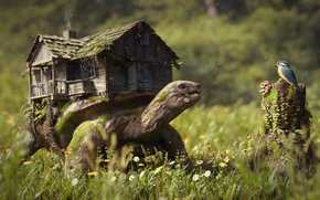 Manuel Peter, turtle, cabin, birdie, bird, Flowers