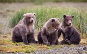 卡特迈国家公园, 阿拉斯加州, 熊, 熊