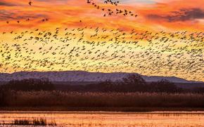 Bosque del Apache Wildlife Refuge, Rio Grande River, New Mexico, sunset, Geese