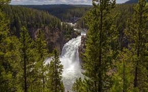 Superiore Yellowstone Falls, Yellowstone River, Grand Canyon, Parco nazionale di Yellowstone, Wyoming, Superiore Yellowstone Falls, Yellowstone River, Parco Nazionale di Yellowstone, Yellowstone, Wyoming, cascata, fiume, foresta, alberi, panorama