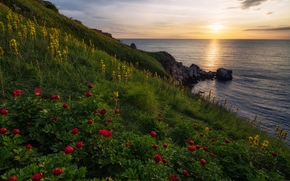 Yaylata reserve, Black sea, Bulgaria, Yailata, Black Sea, Bulgaria, DAWN, rise, sea, coast, Peonies, Flowers