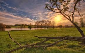 sunset, field, pond, trees, landscape