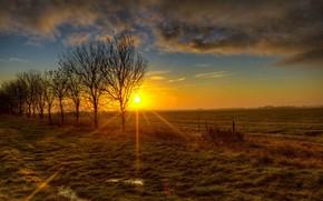 tramonto, campo, alberi, paesaggio