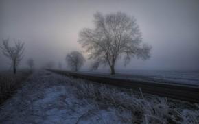 sunset, road, trees, fog, landscape