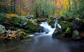 秋, 河, 瀑布, 森林, 树, 性质