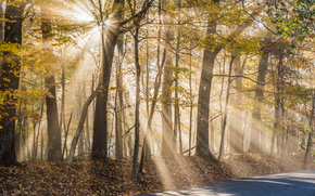 forest, trees, autumn, road, The sun's rays, nature