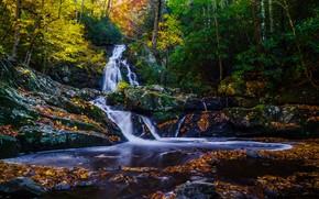 autunno, foresta, alberi, cascata, Rocce, natura