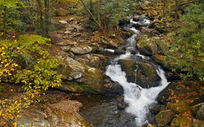 осень, лес, деревья, речка, природа