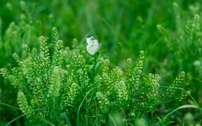 трава, растения, бабочка, макро