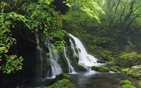 las, drzew, wodospad, Niewielka rzeka, kamienie, charakter