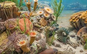 海底世界, 植物, 藻类, 性质, 动物