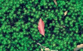 мох, листья, макро