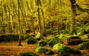 autumn, forest, trees, stones, moss, nature