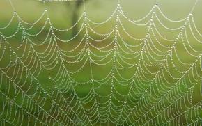 web, gocce, rugiada, Macro