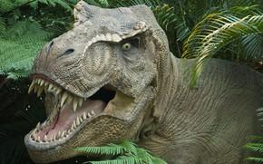 T-Rex, Dinosaur, Jurassic Park