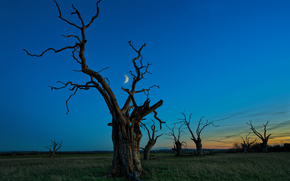 sunset, field, trees, month, landscape
