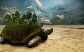 черепаха, пустыня, деревья