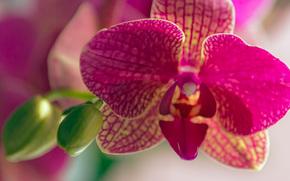 Орхидеи, цветы, макро, природа