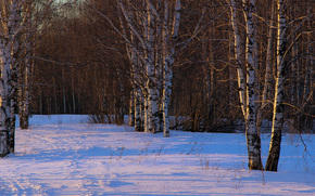 Зима, снег, берёзы, деревья, лес, природа