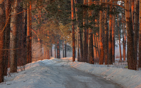Pine, snow, trees, forest, prirodamart, SPRING, morning, tour, road, Kirov region, Russia