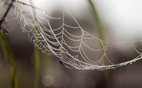 spider, web, August, summer, animals, Macro