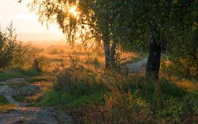 natura, paesaggio, tramonto, sera, Tour, chiaro, sole, Birch, foresta, campo, prati