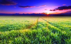 закат, поле, трава, пейзаж