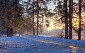 зима, закат, лес, деревья, пейзаж