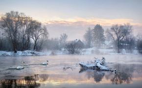закат, зима, река, деревья, лебеди, дома, пейзаж