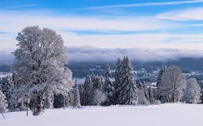invierno, nieve, árboles, HORIZON, paisaje