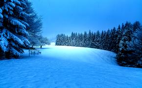 hiver, neige, arbres, paysage