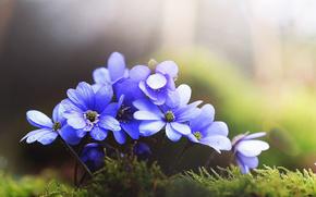 moss, Flowers, Macro