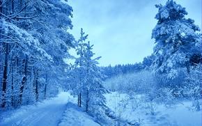 hiver, route, forêt, arbres, paysage