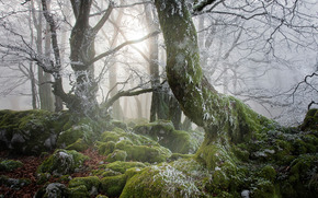 forest, trees, stones, moss, nature
