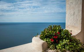 Mediterranean sea, Средиземное море, море, цветы