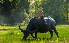 Thailand, Тайланд, мальчик, буйвол, наездник, настроение