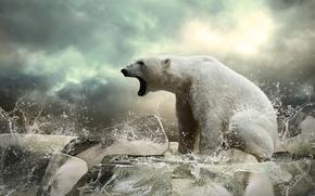 シロクマ, 獣, クマ, 浮氷, 氷