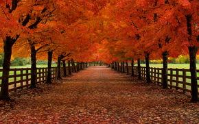 осень, дорога, деревья, забор, пейзаж