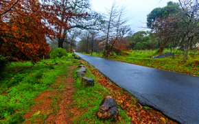 道路, 石, 木, 風景