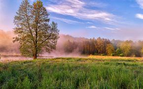 campo, árboles, paisaje